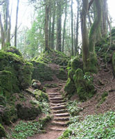 Puzzlewood nature walks